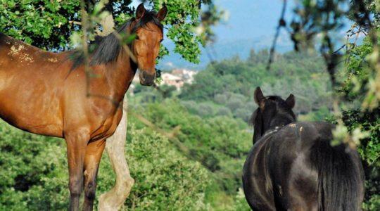 Equitazione Naturale